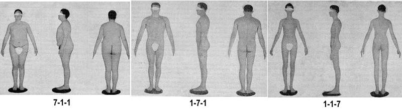 Атлас типов телесложения