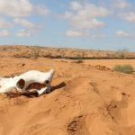 ТОП-10 самых больших пустынь мира!