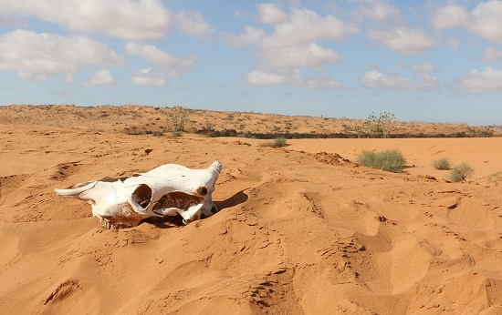 Самые большие пустыни: сахара