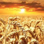 Земледелие восточных славян. Системы и виды.
